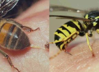 que hacer cuando te pica una abeja o avispa2