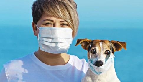 5 Consejos para Cuidar tu Mascota por Coronavirus